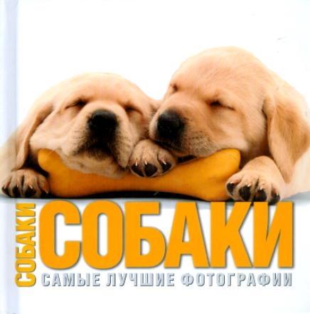 Собаки Самые лучшие фотографии бертолаччо а чудеса света самые лучшие фотографии