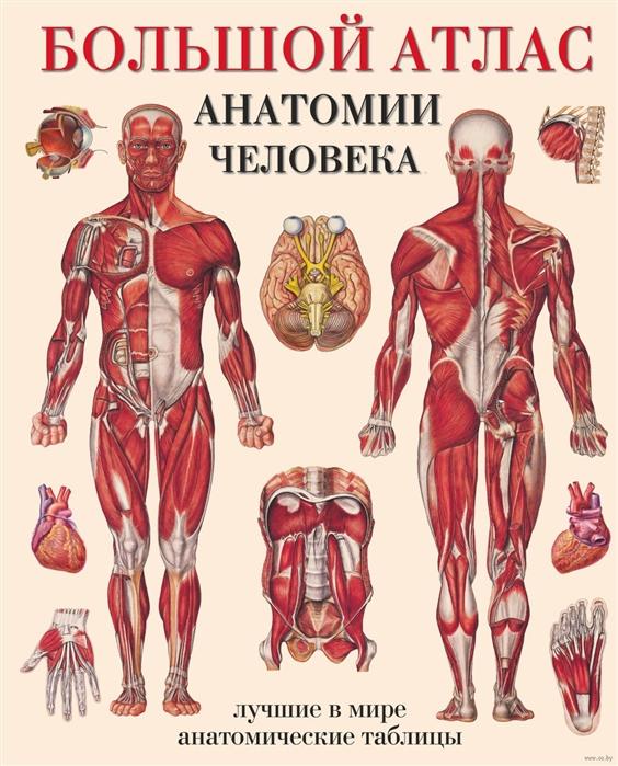 Махиянова Е. (пер.) Большой атлас анатомии человека