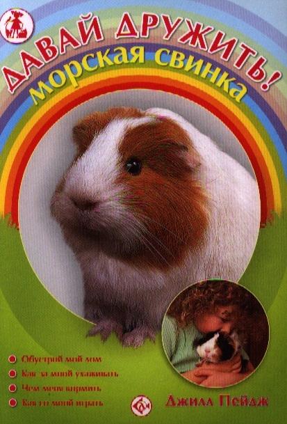 Пейдж Дж. Давай дружить Морская свинка моя маленькая морская свинка
