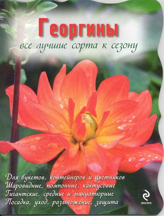 Георгины мягк Цветы в саду и на окне вырубка Рубинина А Эксмо