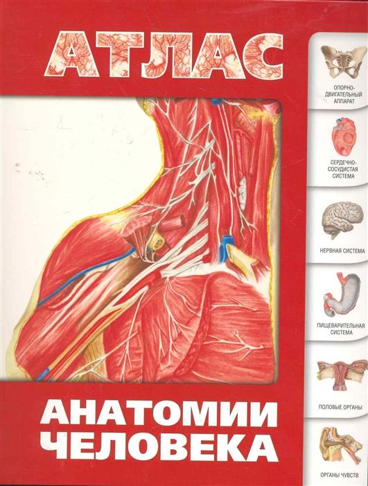 Левкин С. Атлас анатомии человека