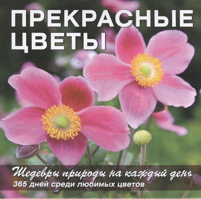 Прекрасные цветы Шедевры природы на каждый день