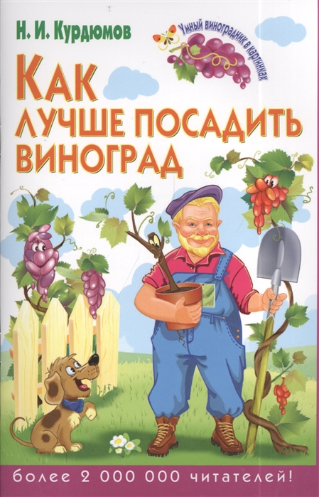 Курдюмов Н. Как лучше посадить виноград н и курдюмов как помочь винограду не болеть