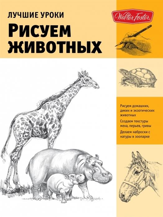 Лучшие уроки Рисуем животных