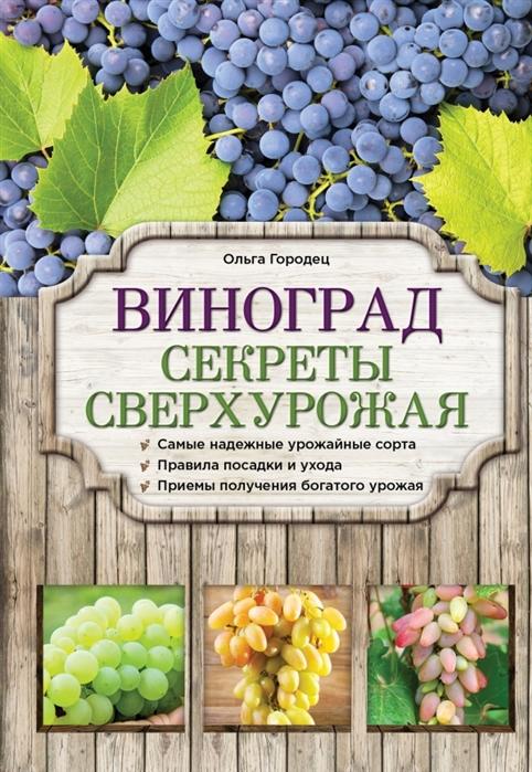 Виноград Секреты сверхурожая