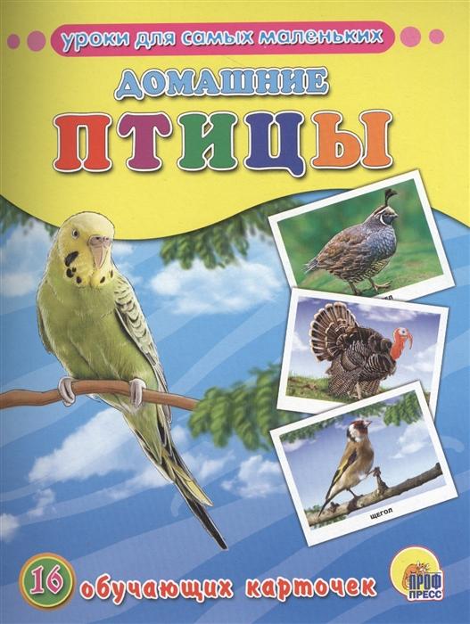 цена на Костина В. (ред.) Домашние птицы 16 обучающих карточек
