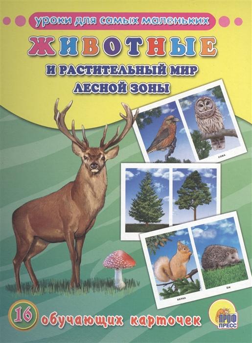 цена на Костина В. (ред.) Животные и растительный мир лесной зоны 16 обучающих карточек