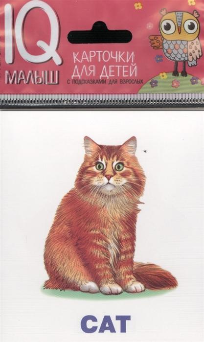 Домашние питомцы Pets English Карточки magic english человек семья питомцы