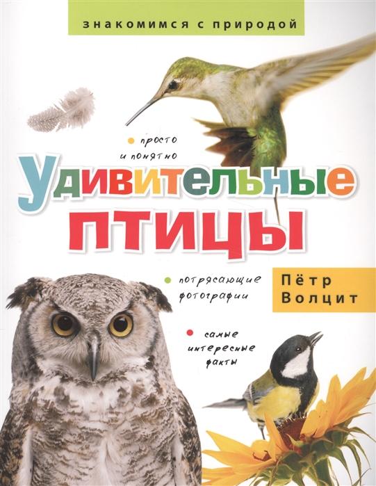 Волцит П. Удивительные птицы