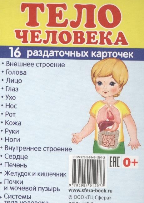 Тело человека 16 раздаточных карточек школьные принадлежности 16 раздаточных карточек