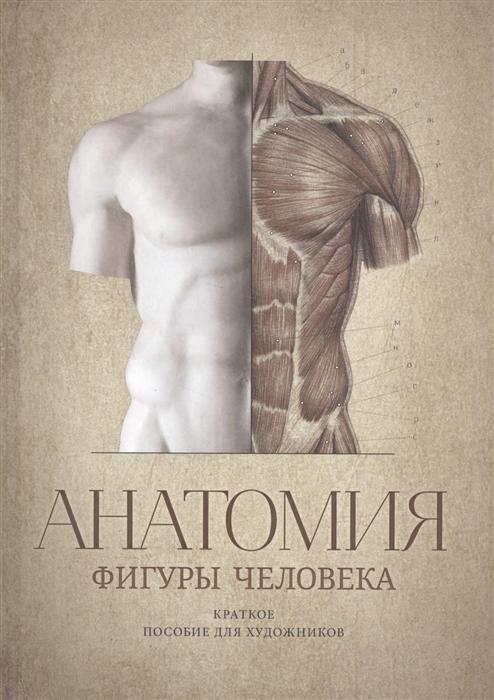 Анатомия фигуры человека Краткое пособие для художников