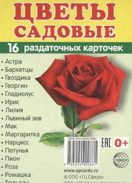 Цветы садовые 16 раздаточных карточек школьные принадлежности 16 раздаточных карточек