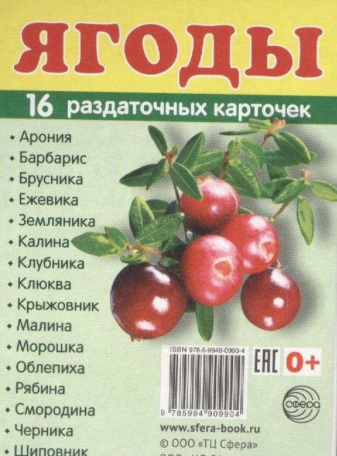 Ягоды 16 раздаточных карточек ягоды 12 красочных карточек