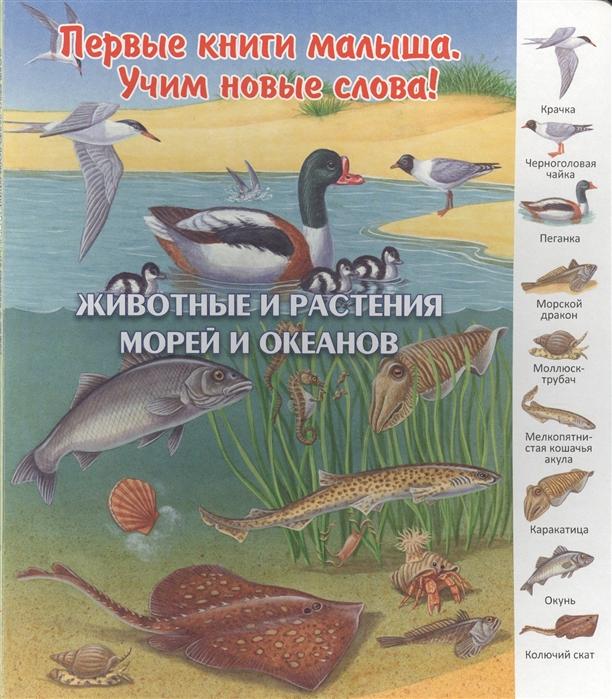 Комарова О. (отв.ред.) Животные и растения морей и океанов животные морей и океанов книжка гармошка