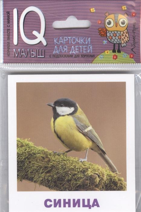 Ходюшина Н. Умный малыш Птицы Карточки для детей с подсказками для взрослых 17 карточек