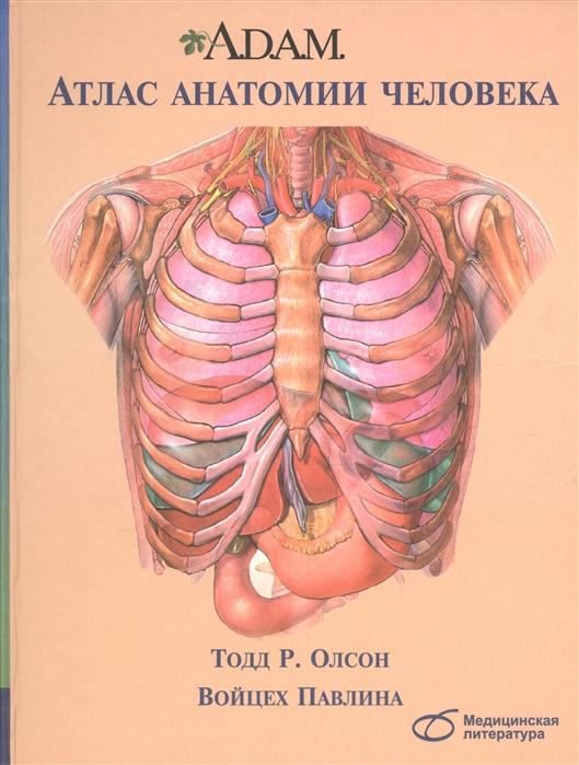 Олсон Т., Павлина В. A D A M Атлас анатомии человека мёллер т б атлас секционной анатомии человека костно мышечная система