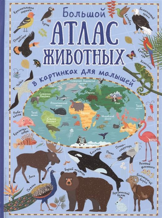 Купить Большой атлас животных в картинках для малышей, АСТ, Первые энциклопедии для малышей (0-6 л.)