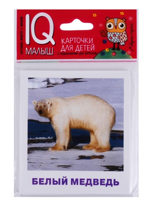 Ходюшина Н. Умный малыш Животные полярных широт Карточки для детей с подсказками для взрослых 17 карточек