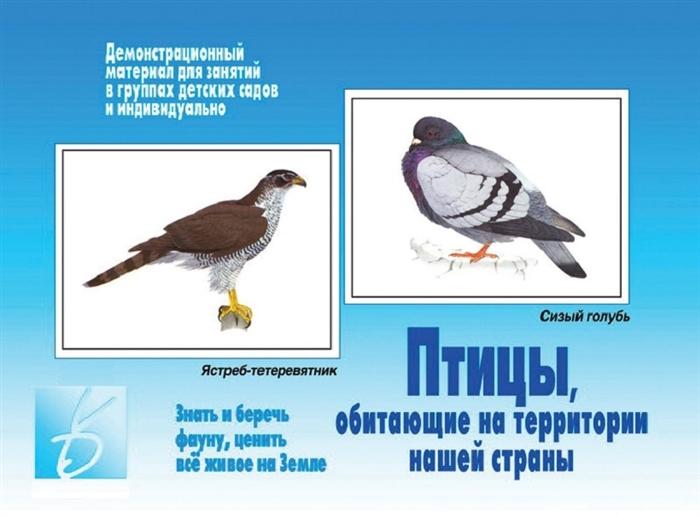 Птицы обитающие на территории нашей страны Демонстрационный материал для занятий в группах детских садов и индивидуально игра птицы обитающие на территории нашей страны