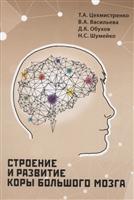 Строение и развитие коры большого мозга