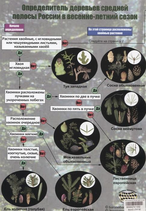Определитель деревьев средней полосы России в весенне-летний сезон