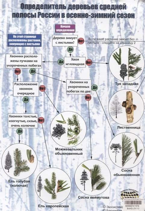 Определитель деревьев средней полосы России в осенне-зимний сезон