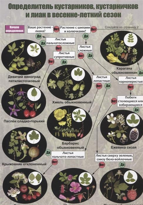 Определитель кустарников кустарничков и лиан средней полосы России в весенне-летний сезон