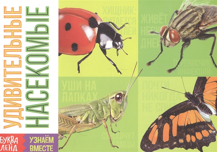 Обучающая книга Удивительные насекомые скиба т в удивительные насекомые