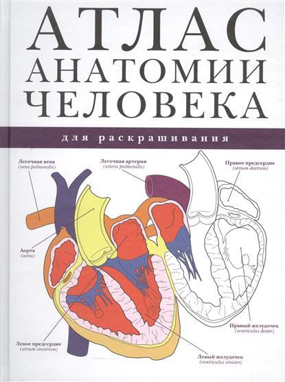 Атлас анатомии человека для раскрашивания ISBN: 9785170954728 красичкова е ред атлас анатомии человека