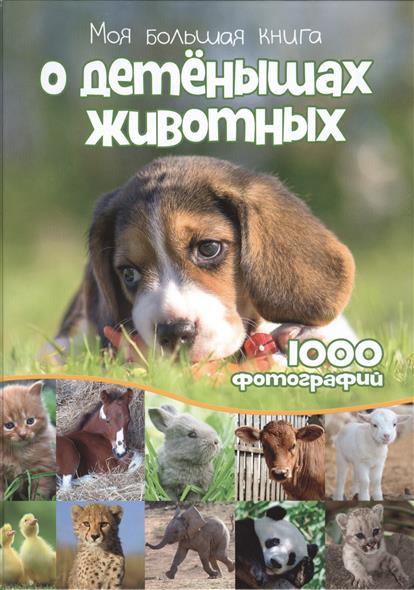 Михеев А. (пер.) Моя большая книга о детенышах животных. 1000 фотографий