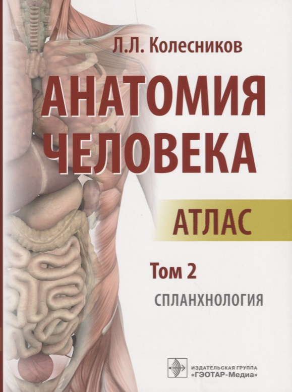 Колесников Л. Анатомия человека. Атлас. Том 2. Спланхнология анатомия человека русско латинский атлас