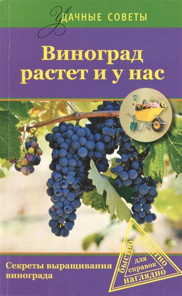 Виноград растет у нас. Секреты выращивания винограда