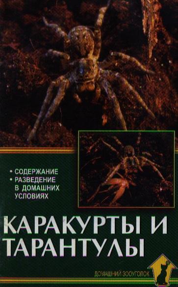 Каракурты и тарантулы