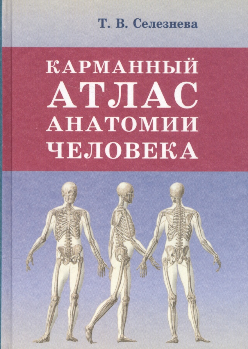 Селезнева Т. Карманный атлас анатомии человека анна спектор большой иллюстрированный атлас анатомии человека