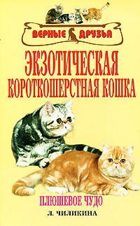 Чиликина Л. Экзотическая короткошерстная кошка