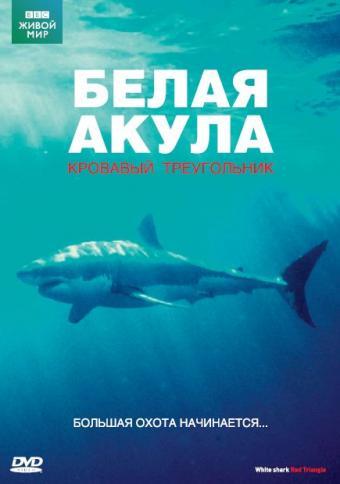 ВВС Белая акула Кровавый треугольник
