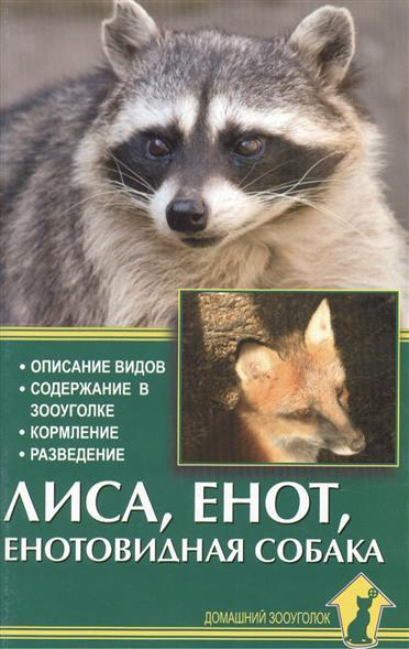 Лиса, енот, енотовидная собака. Описание видов. Содержание в зооуголке. Кормление. Разведение