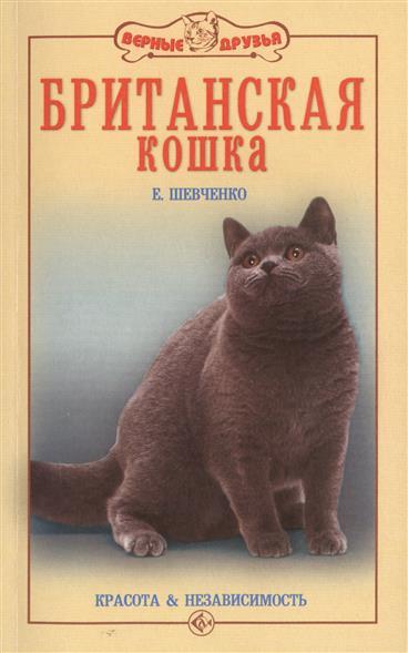 Британская кошка. Красота и независимость