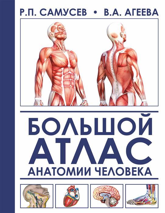Самусев Р., Агеева В. Большой атлас анатомии человека винсент перез большой атлас анатомии человека