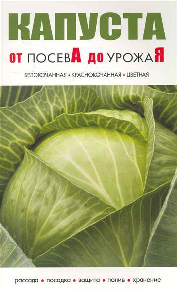 Капуста От посева до урожая