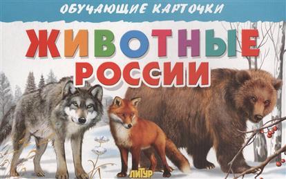 Богуславская М. (худ.) Обучающие карточки. Животные России улыбка обучающие карточки деревья россии