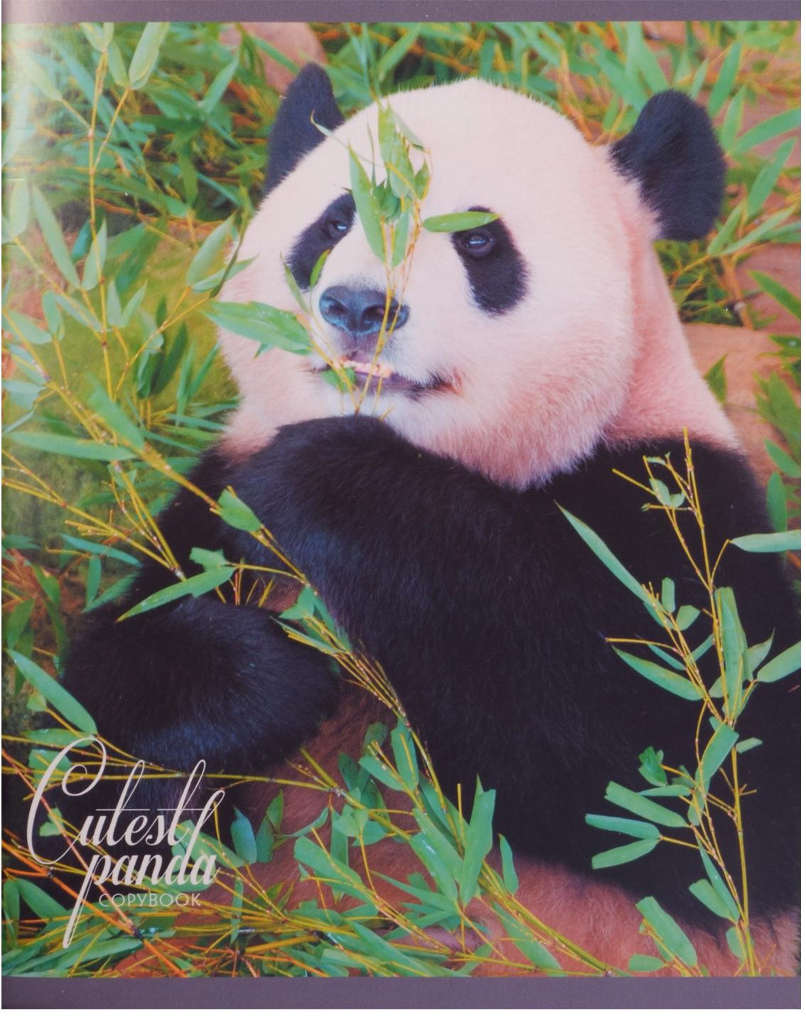 """Тетрадь """"Очаровательные панды"""", 96 листов, клетка"""
