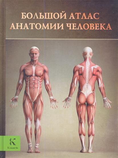 Буканова Ю. (пер.) Большой атлас анатомии человека перез в худож большой атлас анатомии человека