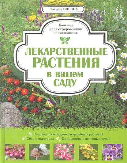Лекарственные растения в вашем саду