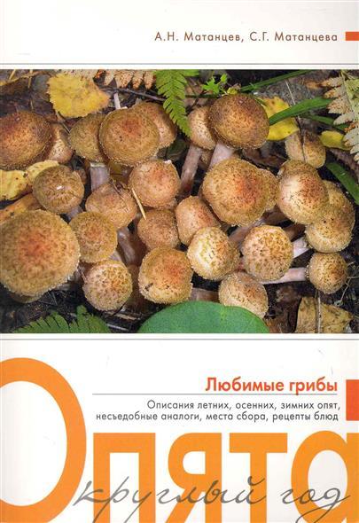 Опята круглый год Любимые грибы