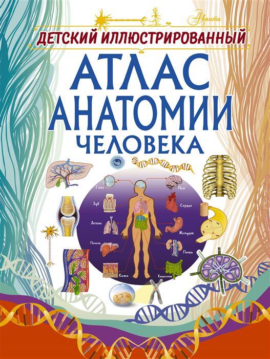 Спектор А. Детский иллюстрированный атлас анатомии человека большой иллюстрированный атлас анатомии человека