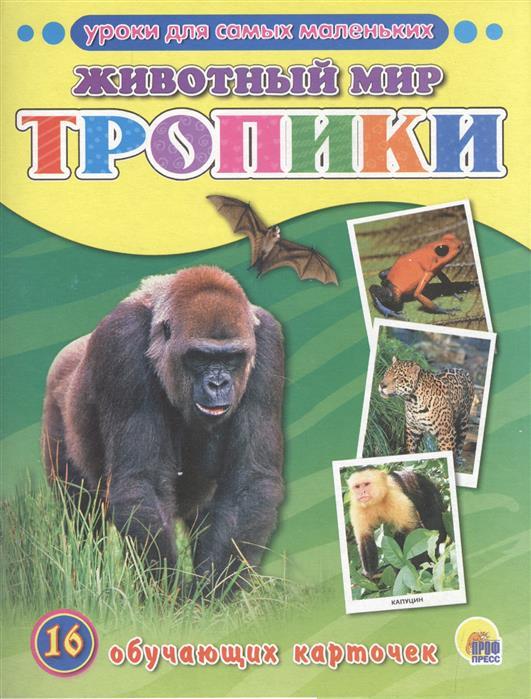 Животный мир. Тропики. 16 обучающих карточек английский алфавит 16 обучающих карточек