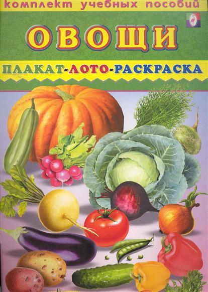 Комплект Овощи Плакат лото раскраска