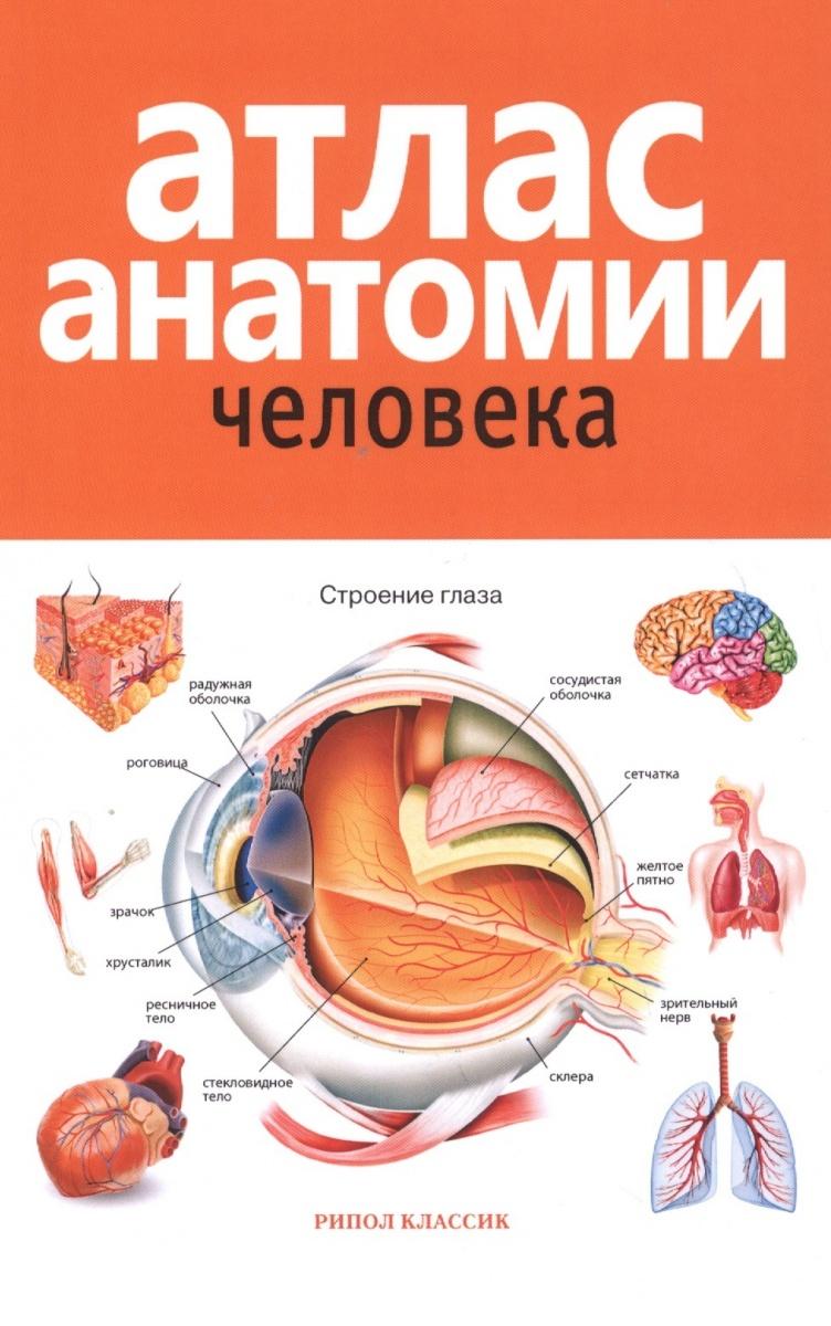 Красичкова Е. (ред.) Атлас анатомии человека анна спектор большой иллюстрированный атлас анатомии человека