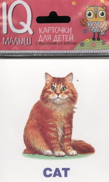 Домашние питомцы. Pets. English. Карточки книги феникс премьер домашние питомцы pets